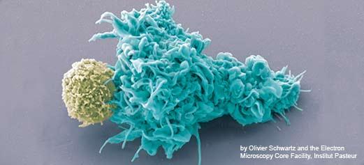 Imunitatea. Componente si roluri